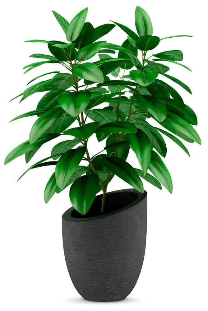 Bright green indoor plant in grey plant pot