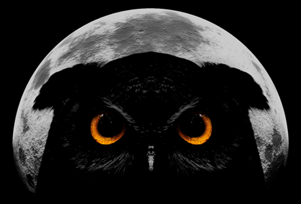 A dark owl with big orange eyes in front of the moon