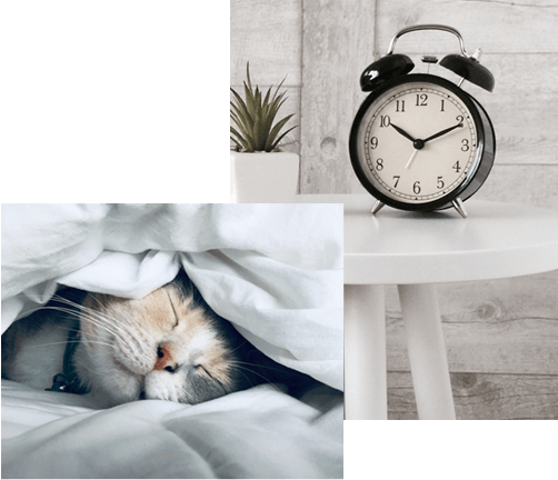 A photo collage of a cat sleeping in a bed and an alarm clock on a table